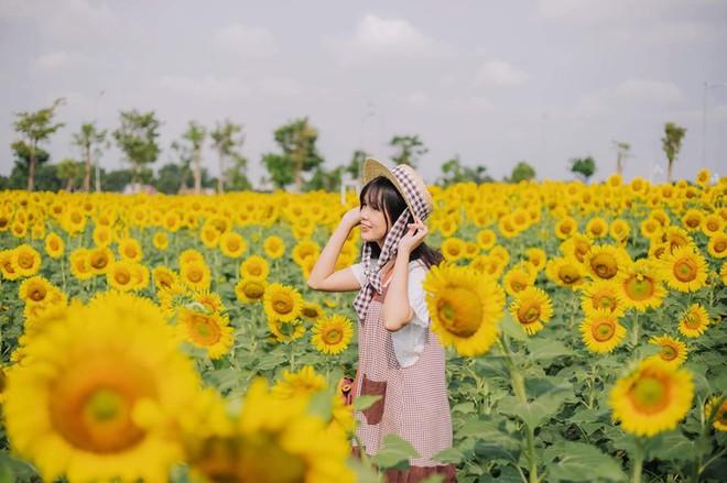 Hốt hoảng trước cảnh tượng hoang tàn của vườn hướng dương hot nhất Sài Gòn: Hoa héo úa, rác ngập tràn khắp nơi! - ảnh 5