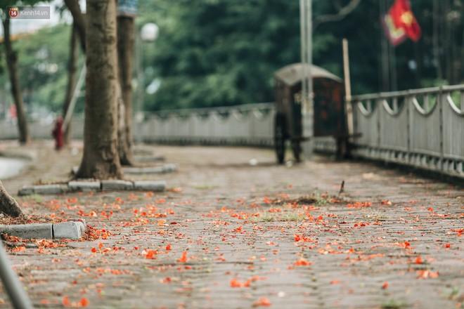 Chùm ảnh: Hà Nội và bản tình ca của những loài hoa mùa hạ thay nhau khoe sắc trên phố - Ảnh 8.