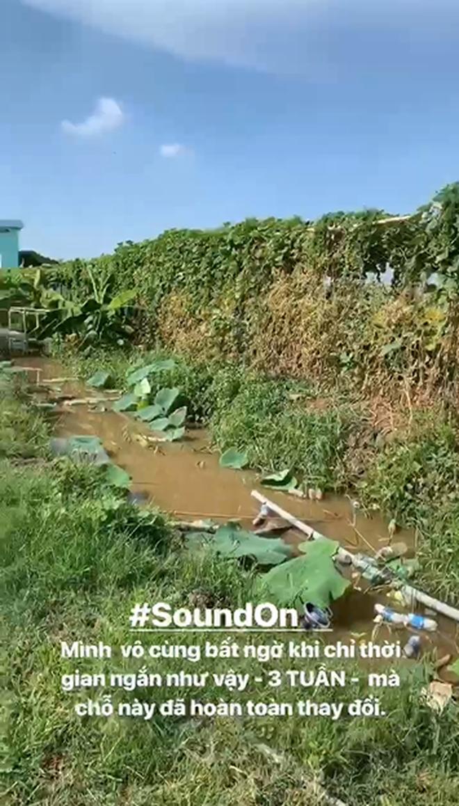 Hốt hoảng trước cảnh tượng hoang tàn của vườn hướng dương hot nhất Sài Gòn: Hoa héo úa, rác ngập tràn khắp nơi! - ảnh 1
