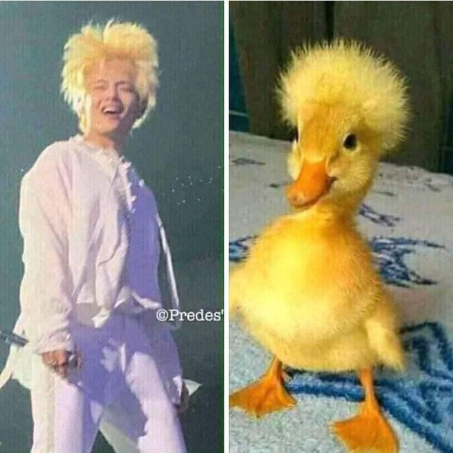 Khi idol Kpop tóc gió thôi bay: Người đẹp lồng lộn, kẻ thành trò cười thiên hạ, riêng em út BLACPINK gây tò mò - ảnh 2