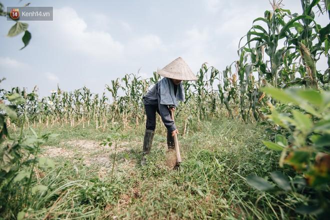 Bà Tân Vê Lốc: Từ người nông dân đến hiện tượng Youtube cán mốc 1 triệu sub chỉ sau 20 ngày - ảnh 11