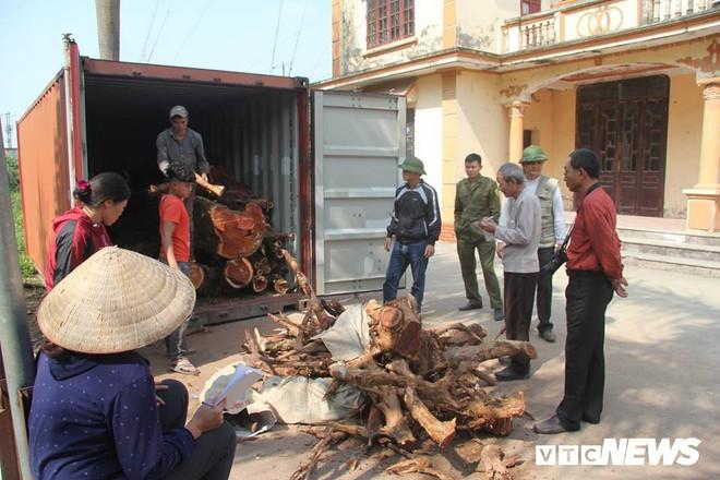 Dân làng Phụ Chính, Hà Nội sắp bán đấu giá hơn 5 tấn gỗ sưa, đắt nhất 32 triệu đồng/kg - ảnh 1