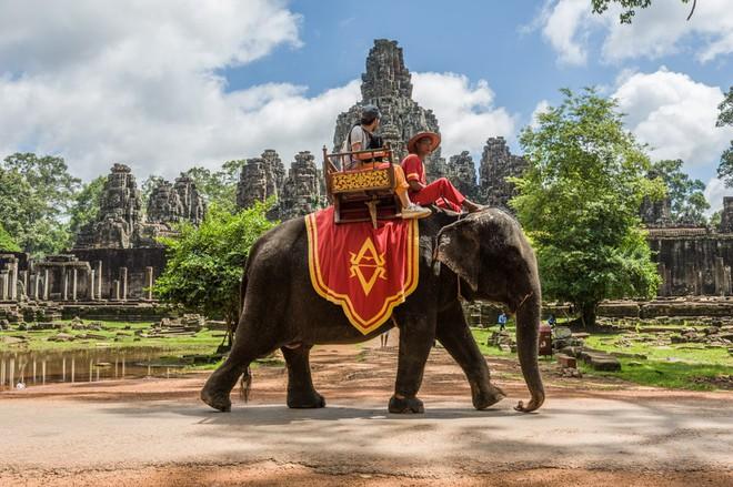 Ám ảnh nạn bóc lột động vật dã man, chính phủ Campuchia cấm hẳn dịch vụ cưỡi voi ở Angkor Wat từ năm 2020 - ảnh 5