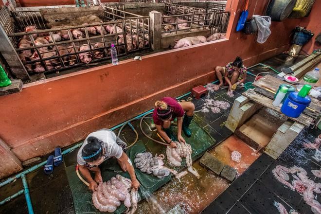 Sự thật tàn khốc đằng sau những lò giết mổ lợn ở Thái Lan với nỗi đau thấu tim can không ai biết - ảnh 5