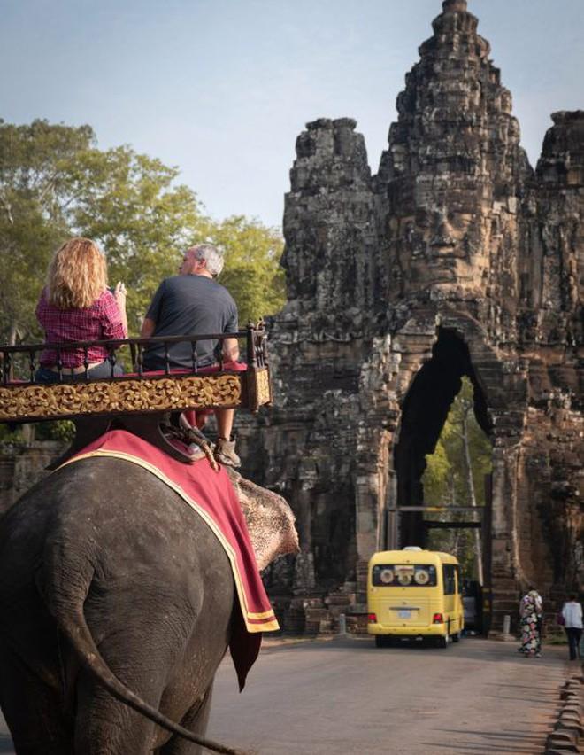 Ám ảnh nạn bóc lột động vật dã man, chính phủ Campuchia cấm hẳn dịch vụ cưỡi voi ở Angkor Wat từ năm 2020 - ảnh 6