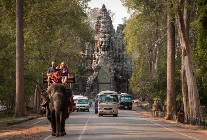 Ám ảnh nạn bóc lột động vật dã man, chính phủ Campuchia cấm hẳn dịch vụ cưỡi voi ở Angkor Wat từ năm 2020 - ảnh 7