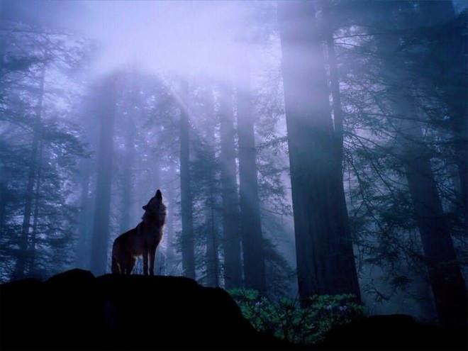 Sói hú dưới trăng: Hiện tượng hư cấu trong phim kinh dị hay câu chuyện có thật? - ảnh 2