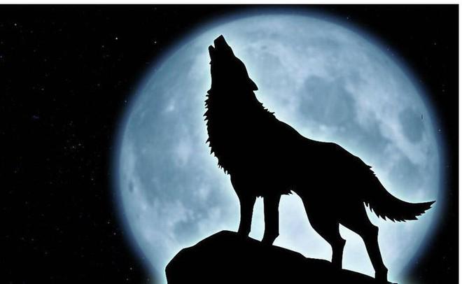 Sói hú dưới trăng: Hiện tượng hư cấu trong phim kinh dị hay câu chuyện có thật? - ảnh 1