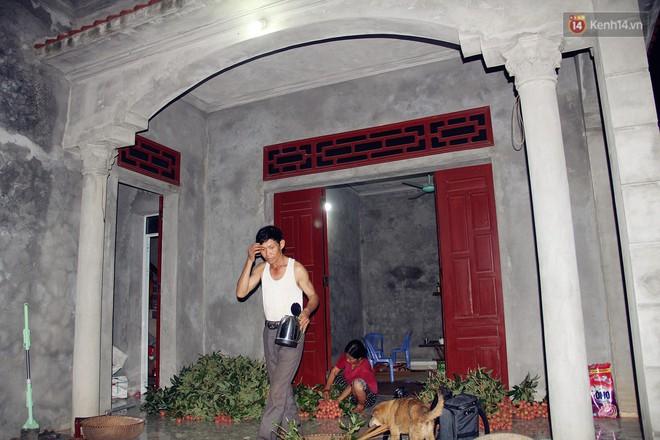 Người dân Bắc Giang dậy từ 3 giờ sáng để bẻ vải, thức xuyên đêm vặt lá cho kịp thời vụ - ảnh 1