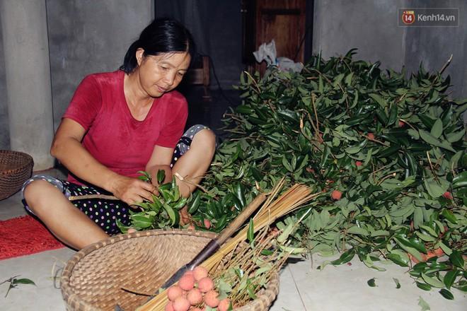 Người dân Bắc Giang dậy từ 3 giờ sáng để bẻ vải, thức xuyên đêm vặt lá cho kịp thời vụ - ảnh 2