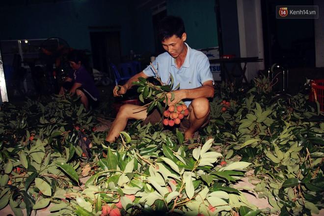 Người dân Bắc Giang dậy từ 3 giờ sáng để bẻ vải, thức xuyên đêm vặt lá cho kịp thời vụ - ảnh 3