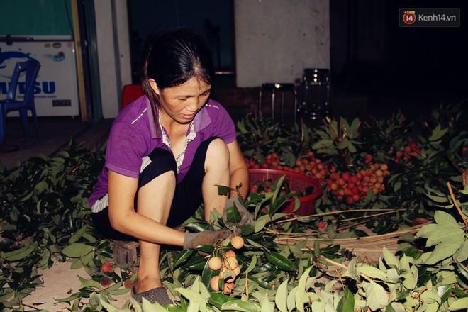 Người dân Bắc Giang dậy từ 3 giờ sáng để bẻ vải, thức xuyên đêm vặt lá cho kịp thời vụ - ảnh 5