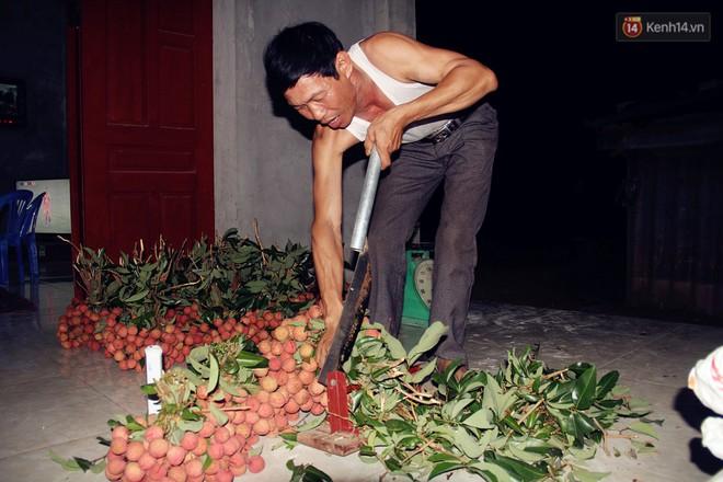 Người dân Bắc Giang dậy từ 3 giờ sáng để bẻ vải, thức xuyên đêm vặt lá cho kịp thời vụ - ảnh 4
