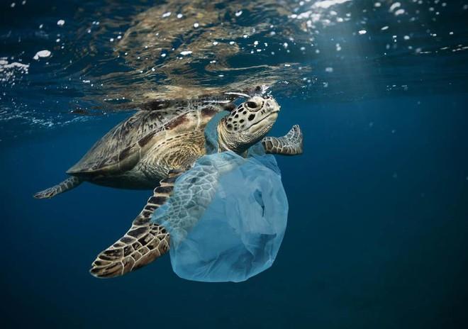 Câu chuyện đốt rác làm nhiên liệu: Phương pháp tuyệt vời giúp biến rác nhựa thành tài nguyên nhưng sự thật đằng sau cũng thật đáng ngại - ảnh 3