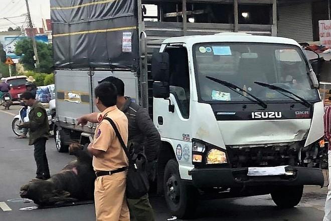 Lâm Đồng: Trâu đực nặng hơn 400kg bị xe tải tông tử vong trên Quốc lộ 20 - Ảnh 2.