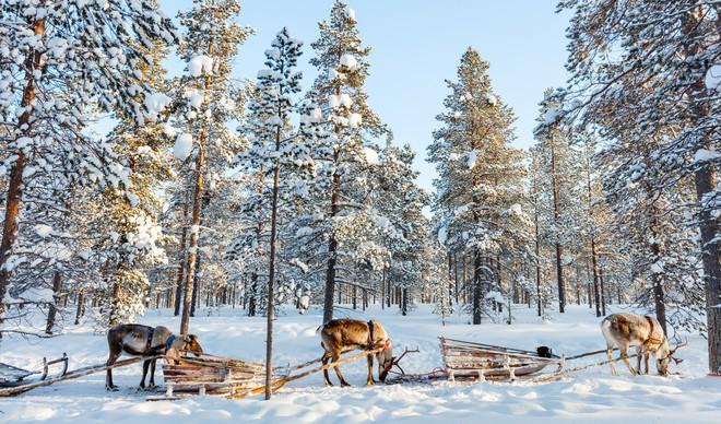 Cận cảnh cuộc sống kỳ lạ tại vùng đất Mặt trời mọc lúc nửa đêm: Lạnh giá quanh năm, nhưng chỉ dựa vào thiên nhiên cũng đủ sống - ảnh 1
