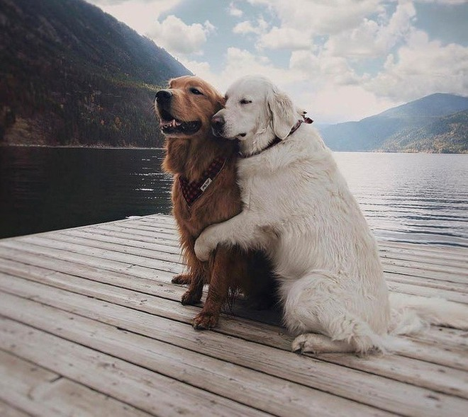 Tan chảy trước tình yêu ngọt ngào và dễ thương của các loài động vật - ảnh 1