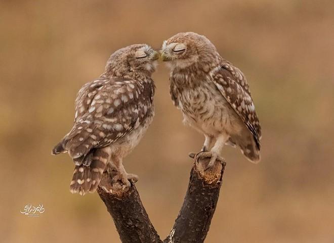 Tan chảy trước tình yêu ngọt ngào và dễ thương của các loài động vật - ảnh 11