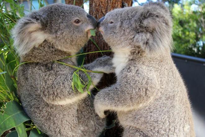 Tan chảy trước tình yêu ngọt ngào và dễ thương của các loài động vật - ảnh 12