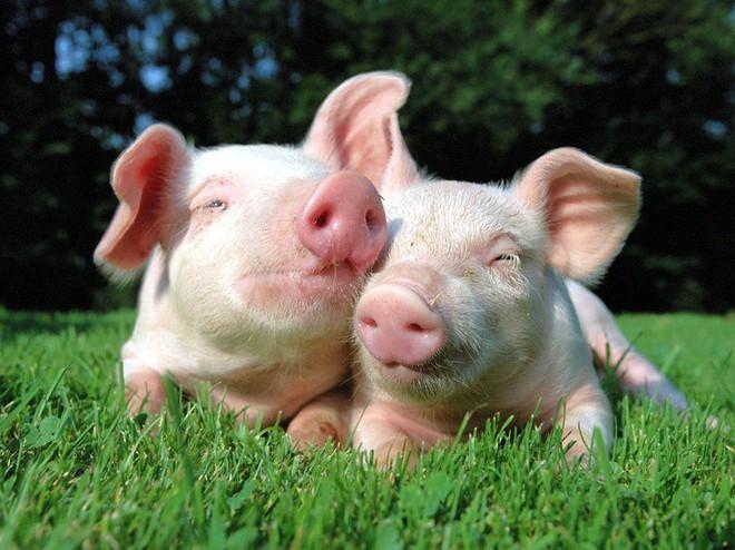 Tan chảy trước tình yêu ngọt ngào và dễ thương của các loài động vật - ảnh 13
