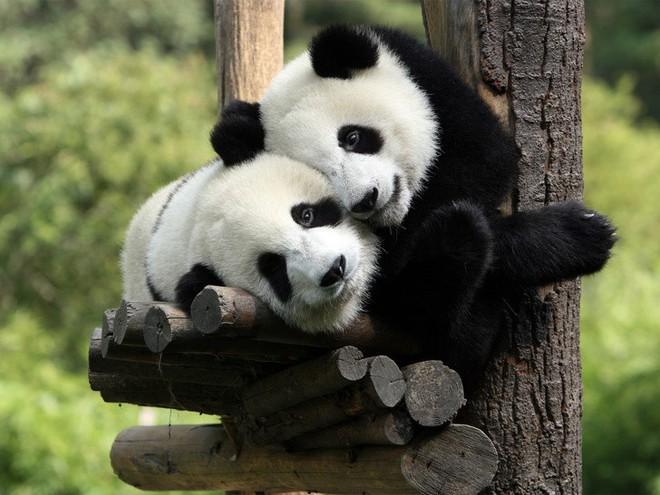 Tan chảy trước tình yêu ngọt ngào và dễ thương của các loài động vật - ảnh 14