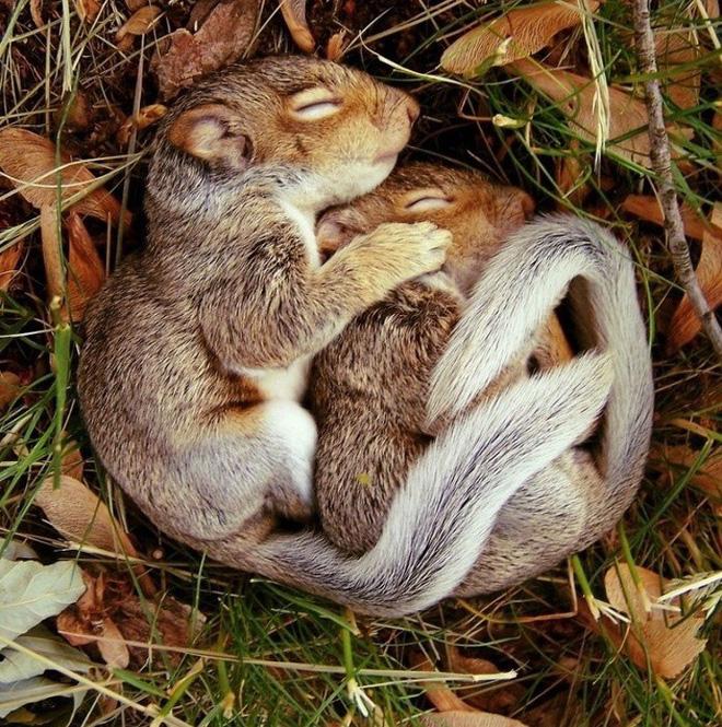 Tan chảy trước tình yêu ngọt ngào và dễ thương của các loài động vật - ảnh 15