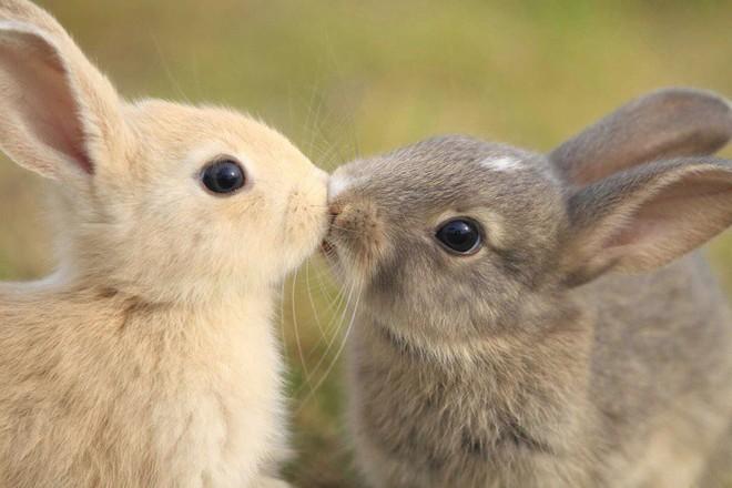 Tan chảy trước tình yêu ngọt ngào và dễ thương của các loài động vật - ảnh 16