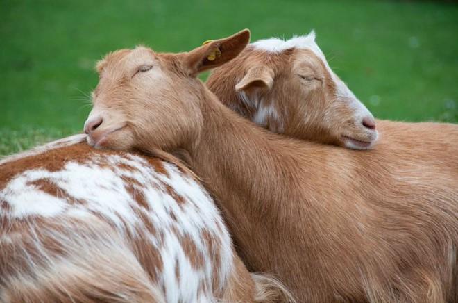 Tan chảy trước tình yêu ngọt ngào và dễ thương của các loài động vật - ảnh 17