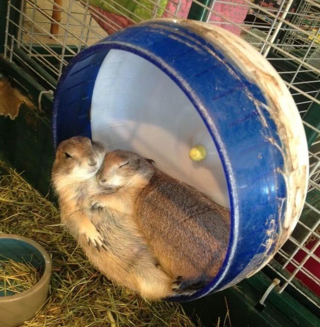 Tan chảy trước tình yêu ngọt ngào và dễ thương của các loài động vật - ảnh 3