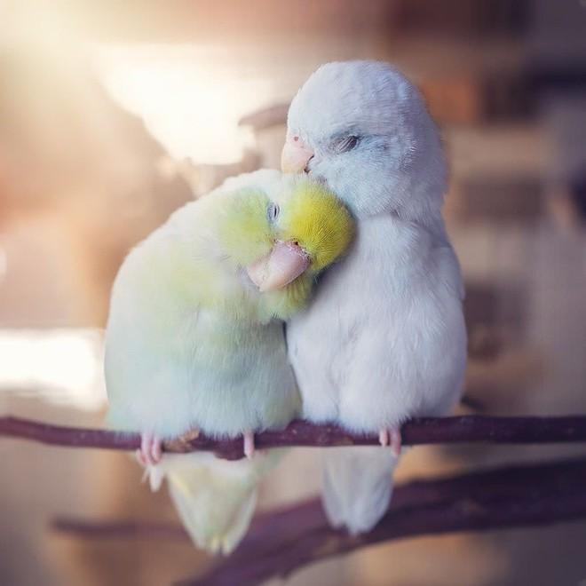 Tan chảy trước tình yêu ngọt ngào và dễ thương của các loài động vật - ảnh 5