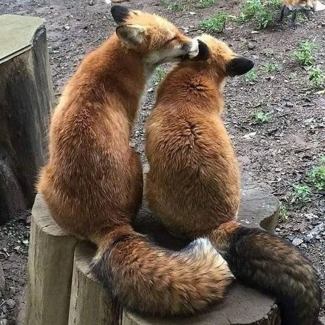 Tan chảy trước tình yêu ngọt ngào và dễ thương của các loài động vật - ảnh 6