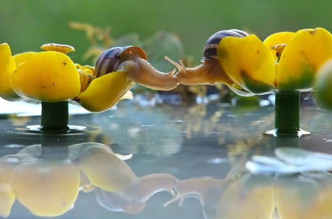 Tan chảy trước tình yêu ngọt ngào và dễ thương của các loài động vật - ảnh 9