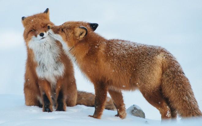 Tan chảy trước tình yêu ngọt ngào và dễ thương của các loài động vật - ảnh 10