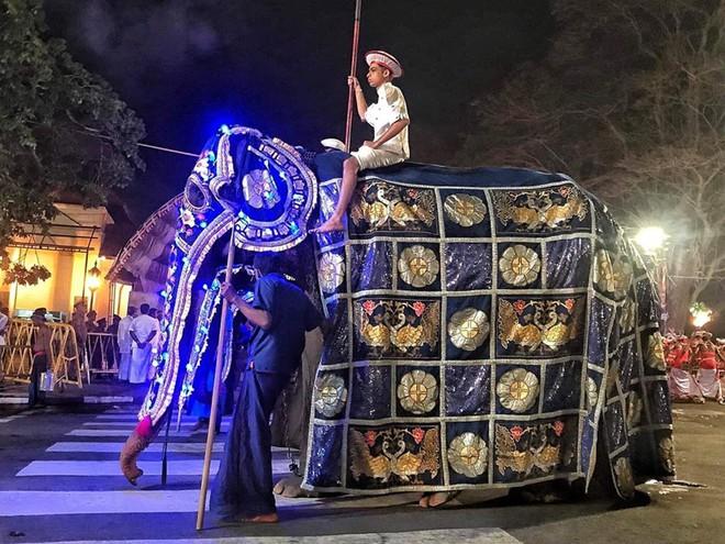 Sự thật đau thương phía sau những con voi lộng lẫy tại lễ hội lớn nhất Sri Lanka: Cơ thể 70 tuổi gầy yếu, da bọc xương đến xót xa - ảnh 1