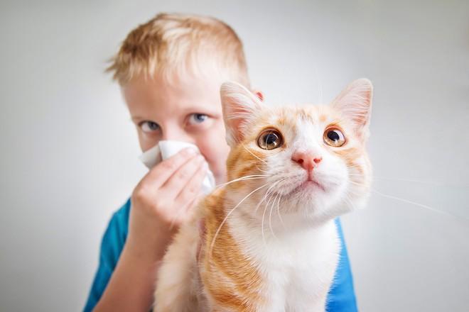 Yêu mèo đến điên dại mà ở gần là ngứa hết cả người? Bi kịch của các sen nay sắp chấm dứt rồi - ảnh 1