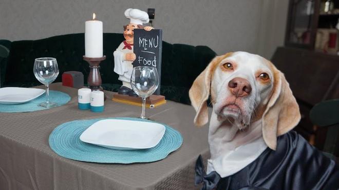 New York tổ chức tuần lễ nhà hàng phục vụ chó - ảnh 1