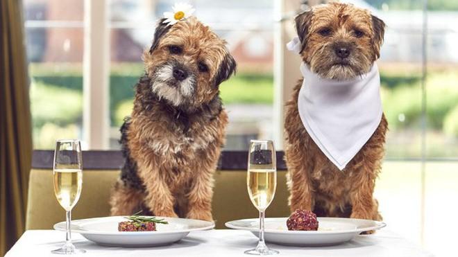 New York tổ chức tuần lễ nhà hàng phục vụ chó - ảnh 2