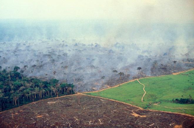 10% loài động vật trên hành tinh như sống trong hỏa ngục vì cháy rừng Amazon: Hậu quả kinh khủng hơn bất kì vụ cháy rừng nào khác - Ảnh 5.