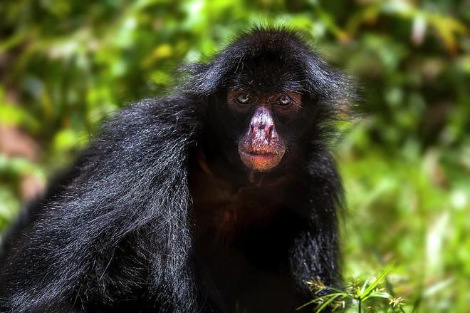 10% loài động vật trên hành tinh như sống trong hỏa ngục vì cháy rừng Amazon: Hậu quả kinh khủng hơn bất kì vụ cháy rừng nào khác - Ảnh 7.