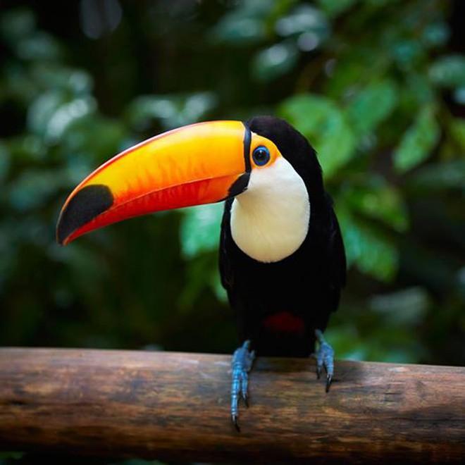 10% loài động vật trên hành tinh như sống trong 'hỏa ngục' vì cháy rừng Amazon: Hậu quả đáng sợ hơn bất kì vụ cháy rừng nào khác - ảnh 10
