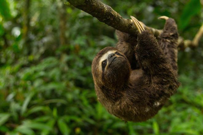 10% loài động vật trên hành tinh như sống trong 'hỏa ngục' vì cháy rừng Amazon: Hậu quả đáng sợ hơn bất kì vụ cháy rừng nào khác - ảnh 4