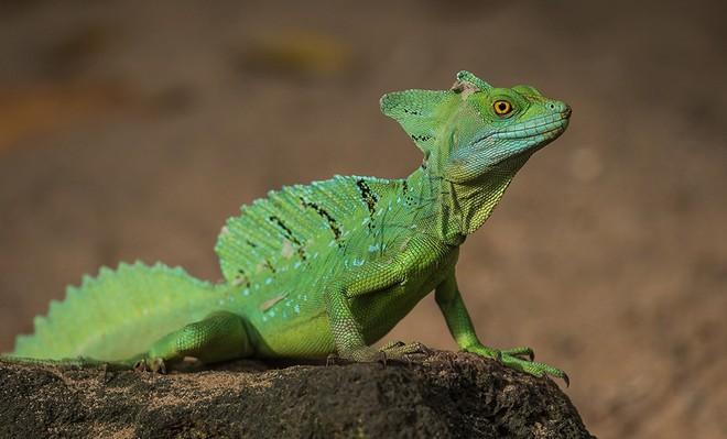 10% loài động vật trên hành tinh như sống trong 'hỏa ngục' vì cháy rừng Amazon: Hậu quả đáng sợ hơn bất kì vụ cháy rừng nào khác - ảnh 7