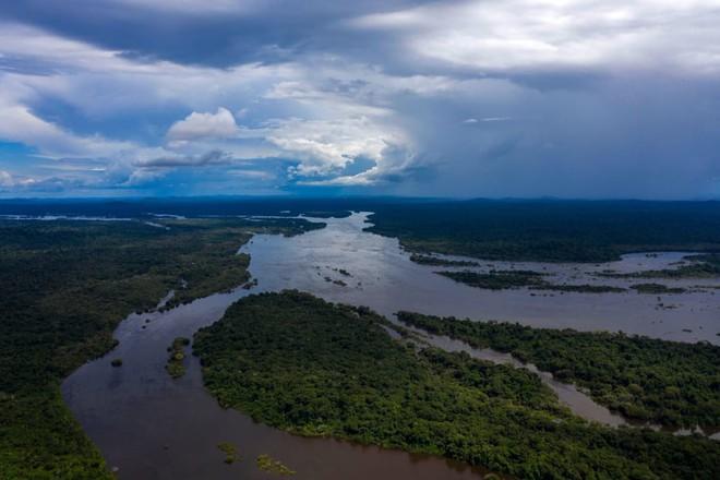 10% loài động vật trên hành tinh như sống trong hỏa ngục vì cháy rừng Amazon: Hậu quả kinh khủng hơn bất kì vụ cháy rừng nào khác - Ảnh 1.