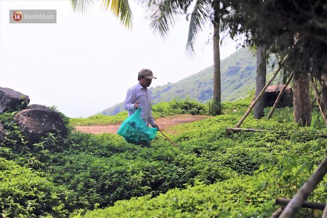 Ông chú bán kem dễ thương nhất Đà Nẵng: 3 năm cặm cụi nhặt rác ở bán đảo Sơn Trà - ảnh 5