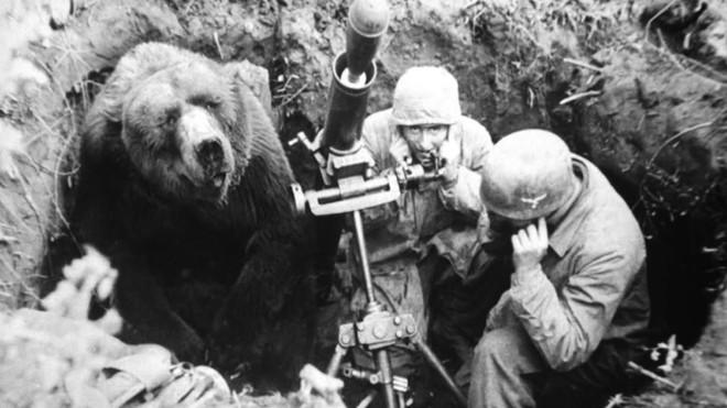 Cuộc đời kì lạ của binh nhì gấu Wojtek: Sống và chiến đấu như người lính thực thụ rồi trở thành anh hùng đáng tự hào của người Ba Lan - ảnh 1