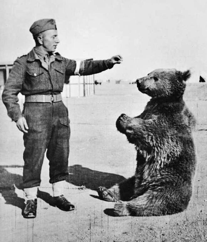 Cuộc đời kì lạ của binh nhì gấu Wojtek: Sống và chiến đấu như người lính thực thụ rồi trở thành anh hùng đáng tự hào của người Ba Lan - ảnh 4