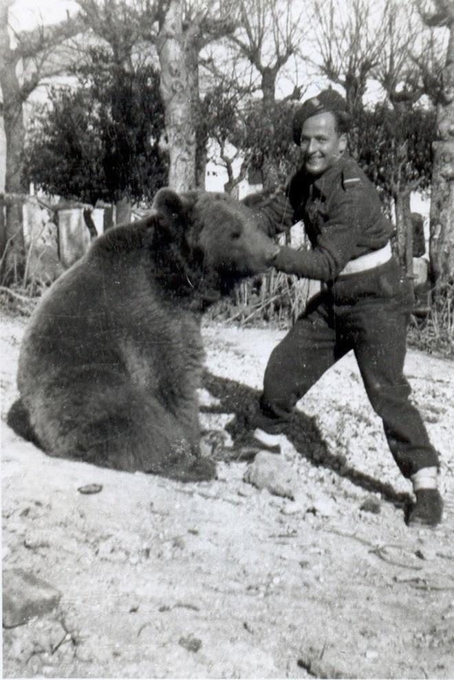 Cuộc đời kì lạ của binh nhì gấu Wojtek: Sống và chiến đấu như người lính thực thụ rồi trở thành anh hùng đáng tự hào của người Ba Lan - ảnh 3