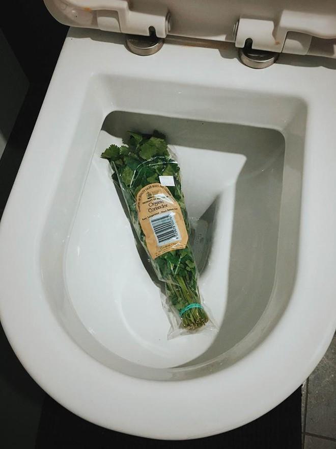 Hội ghét ăn hành Việt Nam tìm thấy tri kỉ tâm giao: Hiệp hội căm thù rau mùi quốc tế, quy tụ hơn trăm nghìn thành viên khắp toàn cầu - ảnh 3