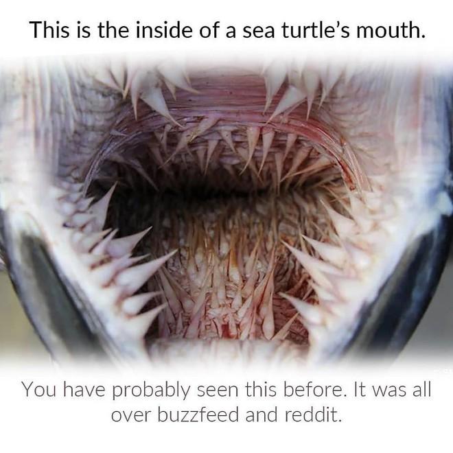 """Những chiếc gai trong bụng rùa biển vốn rất hữu dụng nhưng bỗng hóa lưỡi dao tử thần kể từ khi """"thời kỳ đồ nhựa"""" bắt đầu - ảnh 1"""