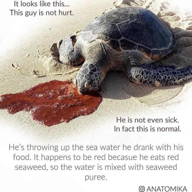"""Những chiếc gai trong bụng rùa biển vốn rất hữu dụng nhưng bỗng hóa lưỡi dao tử thần kể từ khi """"thời kỳ đồ nhựa"""" bắt đầu - ảnh 5"""